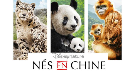 nes-en-chine-disneynature_77650_w460